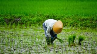 派遣として農家さんで働いてるけど質問ある?