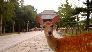 奈良に住んでるけど質問ある?