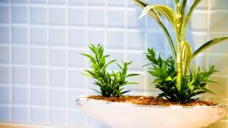 観葉植物にちょっと詳しいけど質問ある?