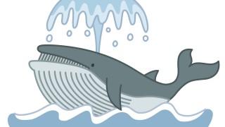 鯨肉のベーコンを今まさに食ってるけど質問ある?