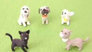 犬と猫の躾にちょっと詳しいけど質問ある?