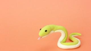 蛇飼ってるんだけど質問ある?