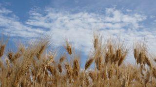 小麦と米を食べれないけど質問ある?