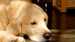 御年17歳のお犬様飼ってるけど質問ある?