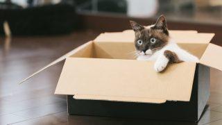 猫8匹飼ってるけど質問ある?