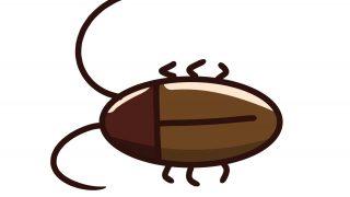 【閲覧注意】ゴキブリ飼育しとるけど質問ある?