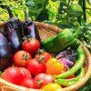 でかいタッパーレベルの野菜をほぼ毎日食べてるけど質問ある?